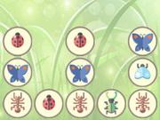 الحشرات والبق