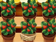 مزرعة الفراولة الجديدة: mia strawberry garden