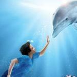 ذكاء الدلفين