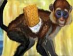 تنظيف القرد