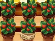 حديقة الفراولة