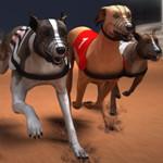 سباق كلاب الصيد