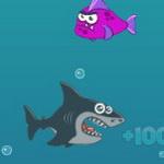 جنون سمكة القرش