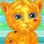 حلق شعر القطة الناطقة جنجر